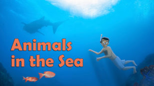 Animals in the Sea