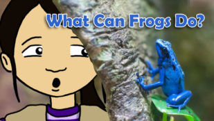 What Can Frogs Do?