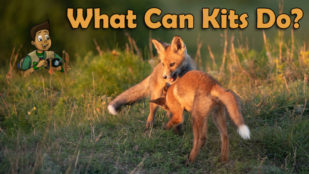 What Can Kits Do?