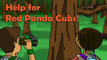 Help for Red Panda Cubs!
