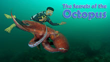 The Secrets of the Octopus