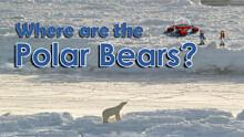 Where are the Polar Bears?