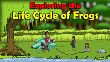 Exploring the Life Cycle of Frogs