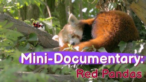 Mini-Documentary