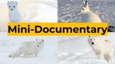 Mini-Documentary (Coming Soon!)